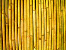 bamboo стена стоковые фото