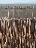 bamboo стена Стоковое Изображение