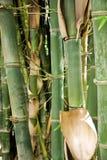 bamboo стержни Стоковое фото RF