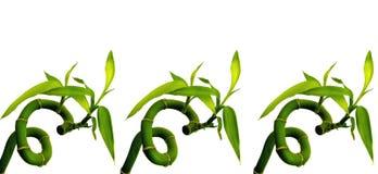 bamboo удачливейшие sixes Стоковая Фотография