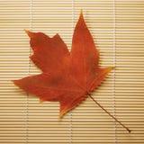 bamboo циновка клена листьев Стоковое Изображение RF