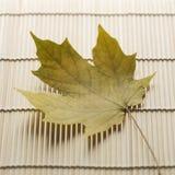 bamboo циновка клена листьев Стоковая Фотография RF
