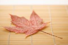 bamboo циновка клена листьев Стоковое Фото