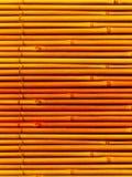 bamboo черенок завода Стоковое Фото