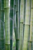 bamboo черенок Стоковое Изображение