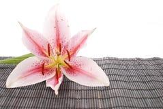 bamboo черная белизна лилии Стоковое Изображение RF
