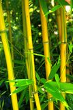 Bamboo 03 Royalty Free Stock Photos
