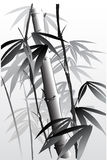 Bamboo 04 Royalty Free Stock Photography