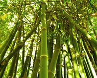 Bamboo 06 Royalty Free Stock Photos
