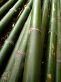 Bamboo 10 Stock Photography