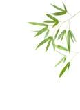 Bamboo. Isolated on white background Stock Images