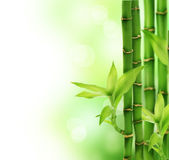 Bamboo. Beautiful Bamboo over blurred background. Copy space