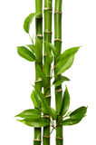 Bamboo. Frame on the white background Stock Images