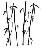 Bamboo Stock Photography