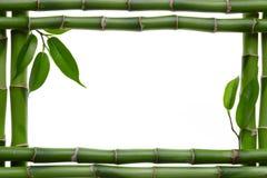 Bamboo Stock Photos
