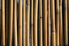 Bamboo. Vertical stalks,  background Royalty Free Stock Image