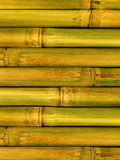 Bamboo. An abstract background from stalks a plant Stock Images