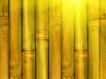Bamboo. An abstract background from stalks a plant Stock Photography