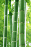 Bamboo. Abstract background of green bamboo forest stock images