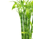 Bamboo. Beautiful Bamboo isolated on white stock photography
