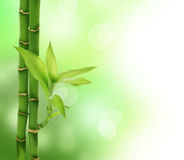Bamboo. Beautiful Bamboo over blurred background.Copy space Stock Images
