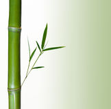 Bamboo. On a white background Stock Photos