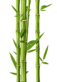Bamboo. Green Bamboo stems isolated on the white background