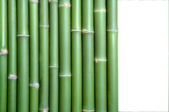 Bamboo. Green vertical chinese bamboo background Royalty Free Stock Photo
