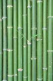 Bamboo. Green vertical chinese bamboo background Stock Photo