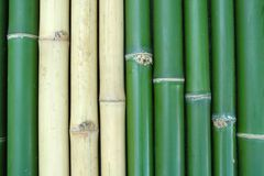 Bamboo. Green and yellow vertical chinese bamboo background Royalty Free Stock Image
