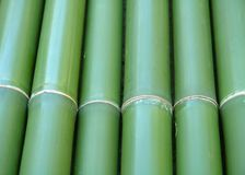 Bamboo. Green vertical chinese bamboo background Stock Photos