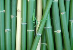 Bamboo. Green vertical chinese bamboo background Royalty Free Stock Photography