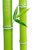 Bamboo. Green Bamboo on white background stock photo