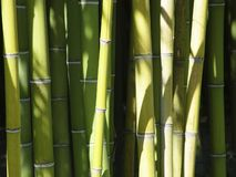 Bamboo. A beautiful and peaceful bamboo forest Stock Photography
