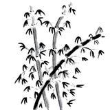 Bamboo. Set isolated on white Royalty Free Stock Photos