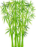 Bamboo. Vector illustration of bamboo's stems on a white background Stock Photography