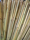 Bamboo Royalty Free Stock Image