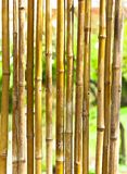 Bamboo. With green blurry background royalty free stock image