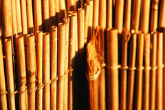Bamboo. The closeup of some bamboo stock images