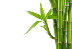 Bamboo. Isolated on a white Royalty Free Stock Image