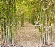 Through the bamboo. Through the bamboo more quiet Royalty Free Stock Photos