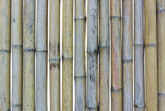 Bamboo. Bamboo fence is starting to decay royalty free stock photos