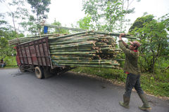 Bamboo. BALI - JANUARY 22. Men loading bamboo for construction in Bali on January 22, 2012 in Bali, Indonesia. Bali still uses bamboo in its construction of Stock Photo
