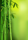 Bamboo. Vector images of stalks of bamboo Stock Illustration