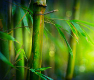 Free Bamboo Stock Photos - 23791463