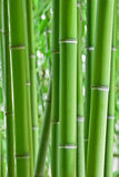 Bamboo. Forest background, like zen Stock Photos