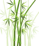 Bamboo. Forest decoration (vector illustration stock illustration