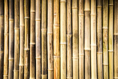 Bamboo. Nice background - colorful bamboo close-up Stock Photography