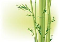 Bamboo. Chinese spring bamboo hand drawing Royalty Free Stock Photos