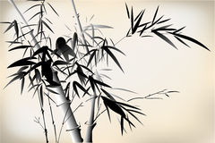 Bamboo. Old Chinese bamboo hand drawing with ink Stock Image